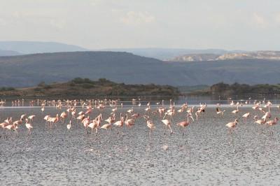 Tanzania-Experience.com221